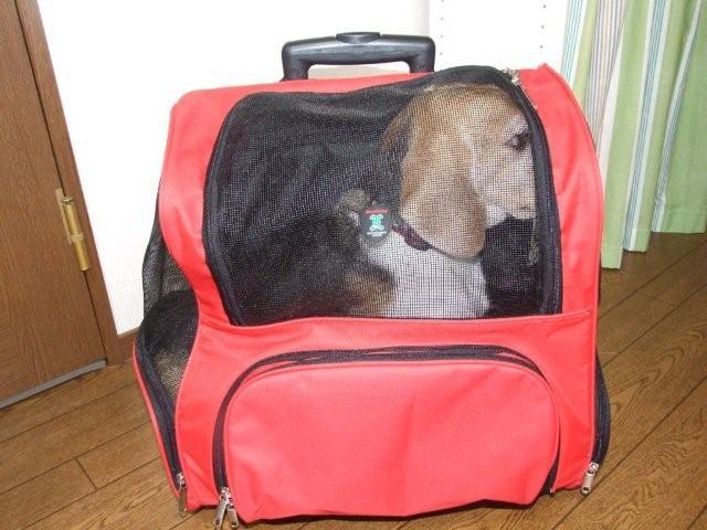 NICO bag 004.jpg